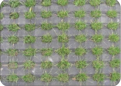 井字形植草砖